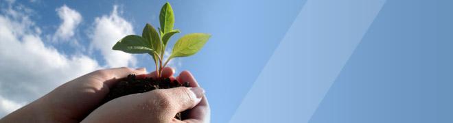 Nutrizione piante